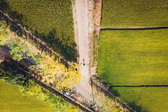 Selfie|Mavic Air (里卡豆) Tags: 白河區 台南市 台灣 tw 臺灣省 mavicair dji 大疆 空拍機 mavic air drone taiwan