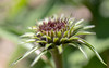 party in the middle (Dotsy McCurly) Tags: canoneos80d efs35mmf28macroisstm coneflower echinacea plant flower garden nature beautiful macro nj newjersey 7dwf