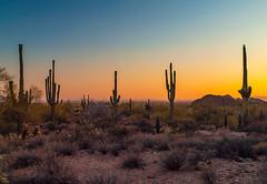 around Phoenix, AZ (allagill) Tags: cacti saguaro sunset arizona desert