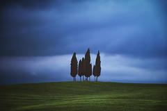 Tuscany - Cypress Hill (030mm-photography) Tags: rot toskana italien reise landschaft poderebelvedere valdorcia nature italy tuscany travel landscape sunrise sonneuafgang nebel fog misty blossom frühling spring blüte poppy mohn