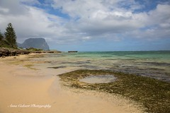 The Lagoon on Lord Howe Island (Anna Calvert Photography) Tags: australia lordhoweisland adventure island landscape nature outdoors scenery sunrise beach lordhowe rocks surf dawn water jetty lagoon mountgower