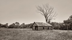 Out There in Iowa (Oliver Leveritt) Tags: ruraldecay abandoned building tree field monochrome sepia platinum nikond610 afsnikkor1635mmf4gedvr oliverleverittphotography wideangle iowa