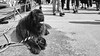 Terre-neuve (Simon BOISVINET) Tags: acros x100f fujifilm terreneuve caen normandie photography blackandwhite dog chien