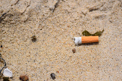 Notice to Nicotine Addicts (RockN) Tags: cigarette butt pollution beach may2018 falmouth capecod massachusetts newengland
