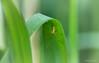 Angeber! . . . einfach mal abhängen! (Pana53) Tags: photographedbypana53 pana53 naturfoto makro florafauna details kleinigkeiten nikon nikond810