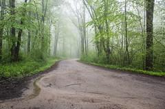 Seen in the mist (hickamorehackamore) Tags: 2018 ct connecticut lyme lymelandconservationtrust lymelandtrust tourdelyme tourdelyme2018 bicycling fundraiser