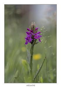 wilde orchidee in mijn tuin