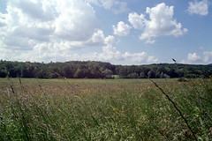 Sunny Saturday (elkarrde) Tags: nature landscape sky spring clouds cloudysky field meadow grass grassland countryside jastrebarsko hrastje croatia saturday sunny sun location:country=croatia canon canonae1 ae1 fdmount camera:brand=canon camera:model=ae1 camera:type=slr camera:format=135 camera:mount=fd vivitarmczoom28200mmf3553 vivitar 28200mm superzoom 282003553 kobori macrofocusingzoom lens:brand=vivitar lens:model=mcmacrofocusingzoom28200mm13553 lens:maxaperture=3553 lens:focallength=28200mm lens:mount=fd lens:format=135 filmneverdieiro200 filmneverdie iro200 200asa dmparadies200 film:brand=filmneverdie film:model=iro200 film:format=135 film:type=c41 film:sensitivity=200asa film:manufacturer=fujifilm lens:manufacturer=kobori scanner:software=vuescanx6495 c41 colornegativefilm filmisnotdead filmisalive scanner:brand=plustek scanner:model=opticfilm8100 analoguephotography analogphotography filmphotography analogue film plustek opticfilm8100 plustekopticfilm8100 vuescanx6495