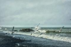 Take Off! (Paul B0udreau) Tags: syb hfg photoshop canada ontario paulboudreauphotography niagara d5100 nikon nikond5100 raw layer nikkor50mm18 hamilton lakeontario water splash wave rocks birds seagulls