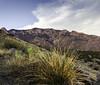 ABQ_Sunset_6-3-18 (BrandonStephenson) Tags: sandias mountains sandia albuquerque new mexico sunset cactus desert high free public domain