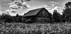 Rustic Barn in Steuben County B&W (LJS74) Tags: barn rustic abandoned clouds fingerlakes flowers landscape blackandwhite blackwhite bw monochrome