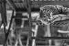 Calito (Black&Light Streetphotographie) Tags: monochrome mono urban katze tiefenschärfe wow availablelight animal city closeup cat nahaufnahme dof deepoffield fullframe vollformat sony streetshots streets streetshooting schwarzweis streetportrait street sw streetphotographie blackandwhite blackwhite bw bokeh bokehlicious
