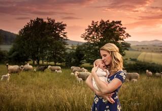 one Sheep, two Sheeps, three Sheeps...