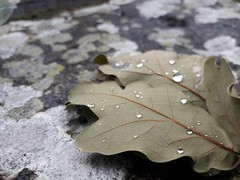 Rain drops keep falling (borneirana) Tags: natur nature natureza naturaleza hojas leaf