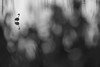 Schilfschatten (IIIfbIII) Tags: graureiher heron egret reiher blackandwhite blacknwhite black water lake anklam stadtbruch moor minimal art schilf nature naturephotography wildlifephotography wildlife birdphotography bird mv mecklenburg vorpommern summer sommer