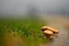 Fungus (Capturedbyhunter) Tags: nature fernando caçador marques fajarda coruche ribatejo sorraia santarém portugal pentax k1 vivitar series 1 135mm 135 close focus cf macro f28 28 bokeh dof pentaxart fungos cogumelo manual focagem foco