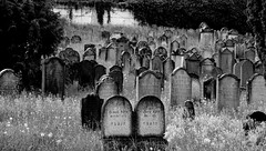 Cimetière Israélite  -  Cemetery Israelite (Philippe Haumesser Photographies (+ 6000 000 view)) Tags: cimetière cemetery cimetières cemeteries tombes tombs graveyards noiretblanc blackandwhite monochrome nikond7000 nikon d7000 reflex 2018 169 tombales pelouse arbre