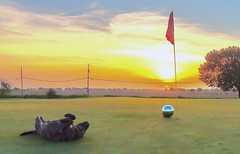 Pet Me!!!!Play With Me!! (clarkcg photography) Tags: shot shoot camera shooting golf golfcourse trespass green orb hole greatdane pup sunrise saturated color yellow gold blue smileonsaturday funny silly comicscene