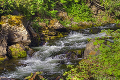 "Granite Creek (jimgspokane) Tags: granitecreek creeks forests camping trees washingtonstate idahostate ""nikonflickraward"" today´sbest"