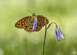 Mariposa secando sus alas