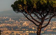 A glimpse of Rome (Luca Zappacosta) Tags: roma rome castelliromani monteporziocatone sanpietro basilicadisanpietro cupolone stpeter sangiovanniinlaterano altaredellapatria pino pinocomune