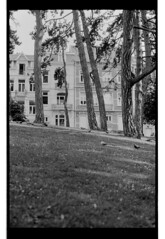 P63-2018-003 (lianefinch) Tags: argentique argentic analogique analog monochrome blackandwhite blackwhite bw noirblanc noiretblanc nb nature city façades fasad arbres trees birds oiseaux parc