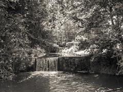 P6070150.jpg (Daniel_Hache) Tags: arbres lumiere soleil sun jouyenjosas bassin trees light îledefrance france fr