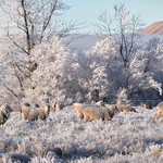 Frosty morning thumbnail