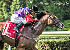 Call to Mind wins the Belmont Gold Cup (EASY GOER) Tags: horseracing horses equine thoroughbred sport belmontpark