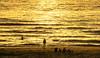 Each in his own way (Wöwwesch) Tags: sunset golden reflections silhouettes enjoy beach people noordzee northsea interesting walk evening