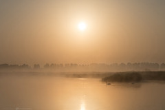 (CarolienCadoni..) Tags: ngc sonyilcaa99m2 sony swan sunrise sun sunlight misty mistymorning foggy light water lake buinen lofar