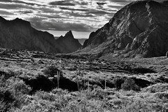 A Look Across the Chisos Basin Area to Peaks of the Chisos Mountains (Black & White, Big Bend National Park) (thor_mark ) Tags: alongchisosbasinroad bigbendnationalpark bigbendranges blackwhite blueskieswithclouds capturenx2edited carterpeak chihuahuandesert chisosbasin chisosbasinroad chisosmountains colorefexpro day1 desert desertlandscape desertmountainlandscape desertplantlife grassymeadow hillsideoftrees intermountainwest landscape lookingwest mountains mountainsindistance mountainsoffindistance mountainside nature nikond800e outside project365 roadsidepulloff silverefexpro2 southwestbasinsandranges sunny thewindow transpecostexasranges trees triptobigbendnationalpark usbiospherereserve vernonbaileypeak tx unitedstates