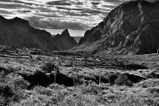 A Look Across the Chisos Basin Area to Peaks of the Chisos Mountains (Black & White, Big Bend National Park)
