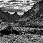 A Look Across the Chisos Basin Area to Peaks of the Chisos Mountains (Black & White, Big Bend National Park) thumbnail