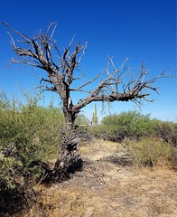 Twisted (jeffcbowen) Tags: desert arizona tucson