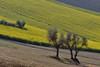 scorcio primaverile (luporosso) Tags: natura nature naturaleza naturalmente nikon nikond500 nikonitalia scorcio scorci country countryside campagna campi terra terraarata heart alberi trees verde green marche italia italy