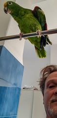 Pronti per la doccia (tullio dainese) Tags: 2018 gorizia pappagalli famiglia loreto animali