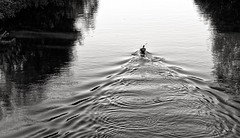 Perfect afternoon (Streetphotograph.de) Tags: waves sunset afternoon kayaking kayak river water leonegraph streetphotographer streetphotography candid unposed street germany deutschland city stadt monochrome bw blanco negro bn sw schwarz weis panasonicgx80 mft hannover
