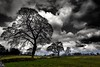 Drama (Phil-Gregory) Tags: nikon d7200 tokina1120mmatx tokina wideangle ultrawide dovedale peakdistrict trees clouds dramatic silhouette scenicsnotjustlandscapes landscapes countryside ngc