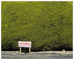 No Parking. Ilkley (dam design) Tags: ilkley yorkshire hedge suburbia noparking sign