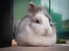 Coco (Stefano Guerrini Rocco_) Tags: italy animal bunny nature cute coniglio coco italia colori colors olympus camera