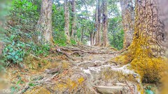 The road of pilgrimage.. (hoangbinhboong) Tags: road forest yêntử path việtnam vietnam