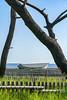 Pine tree and ark (KTK's) Tags: 三沢市 青森県 日本 jp