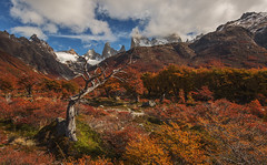 Colorful Poincenot, Los Glaciares NP, Argentina (beautifullcreatures) Tags: argentina natural scenery clouds trees woods grass wild creek flowing water fall np peaks mountains snow