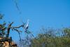 Heron, Mapungubwe National Park, South Africa (nadine3112) Tags: mapungubwenationalpark reiher vogel
