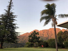 Redwood and Palm Tree (RobW_) Tags: redwood palm tree sunset simonsberg thehydro lindida stellenbosch western cape south africa saturday 17mar2018 march 2018