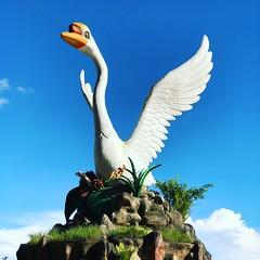 Swan of Sibu (BiggestWoo) Tags: sarawak river malaysia borneo sibu swan