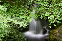 Fragas do Eume (dfvergara) Tags: capela galicia españa eume fragasdoeume fragas rio sesin riosesin bosque arboles agua largaexposicion seda efectoseda naturaleza verde vegetacion