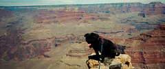 The Perch (Woodypug) Tags: grandcanyon god creation coconino pug peaceful landscape love