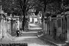 Cimetière du Père Lachaise - Cementerio Père-Lachaise, París (Ce Rey) Tags: cementerios cimitieri paris cemeteries cementerio monocromo blancoynegro blackandwhite necropolis cimetièredupèrelachaise cemetery bw 15challengeswinner challengeyouwinner